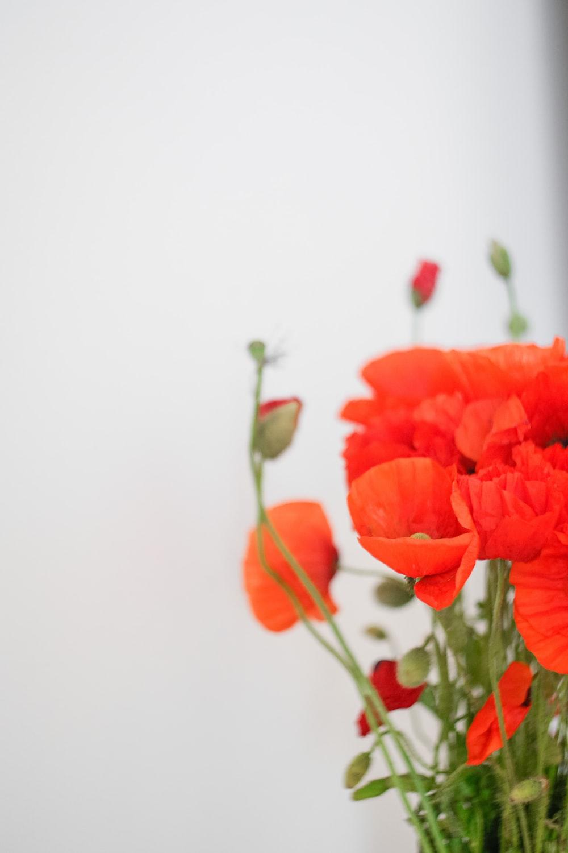 orange flower in white ceramic vase