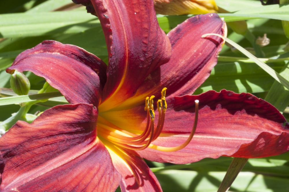 pink lily in bloom during daytime