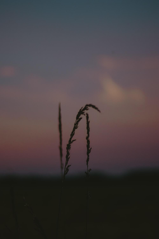 green grass under gray sky