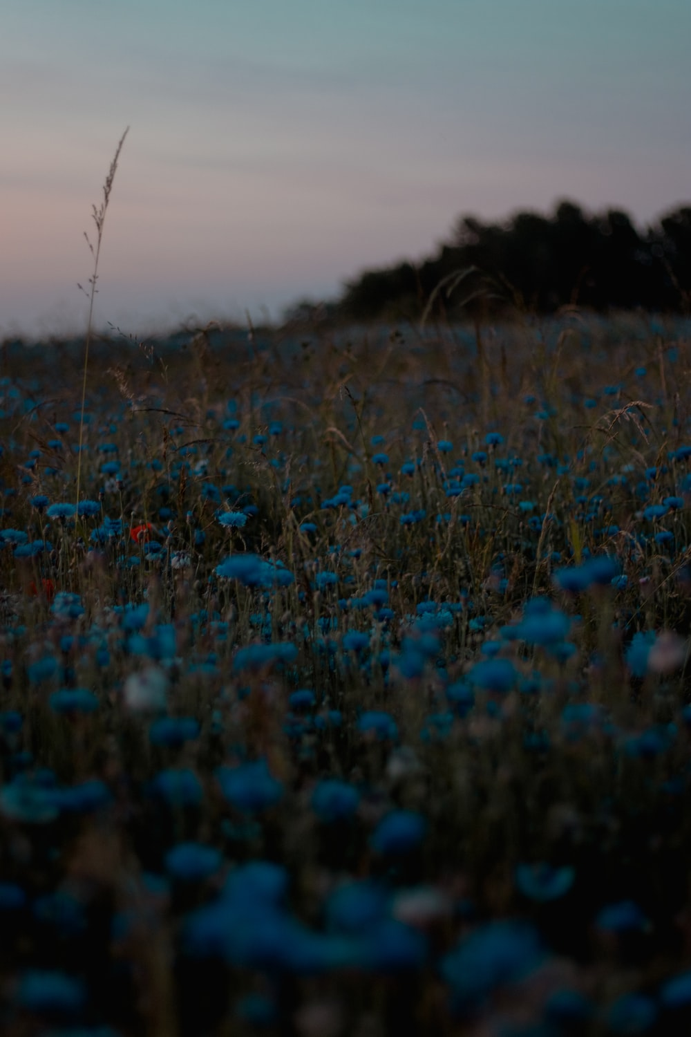 blue flowers on field during daytime