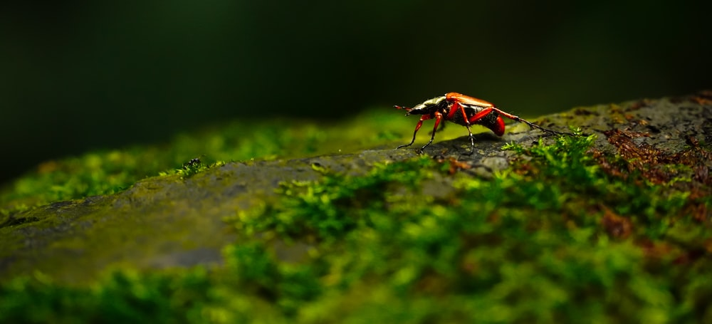 red and black insect on green moss in tilt shift lens