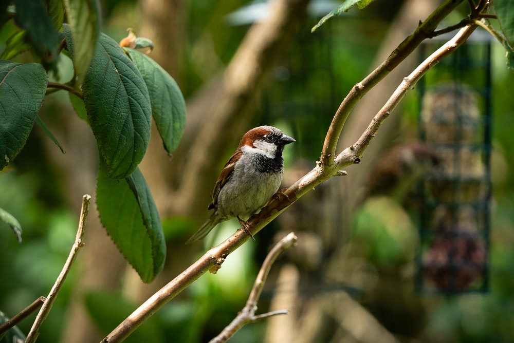 white and brown bird on green leaf
