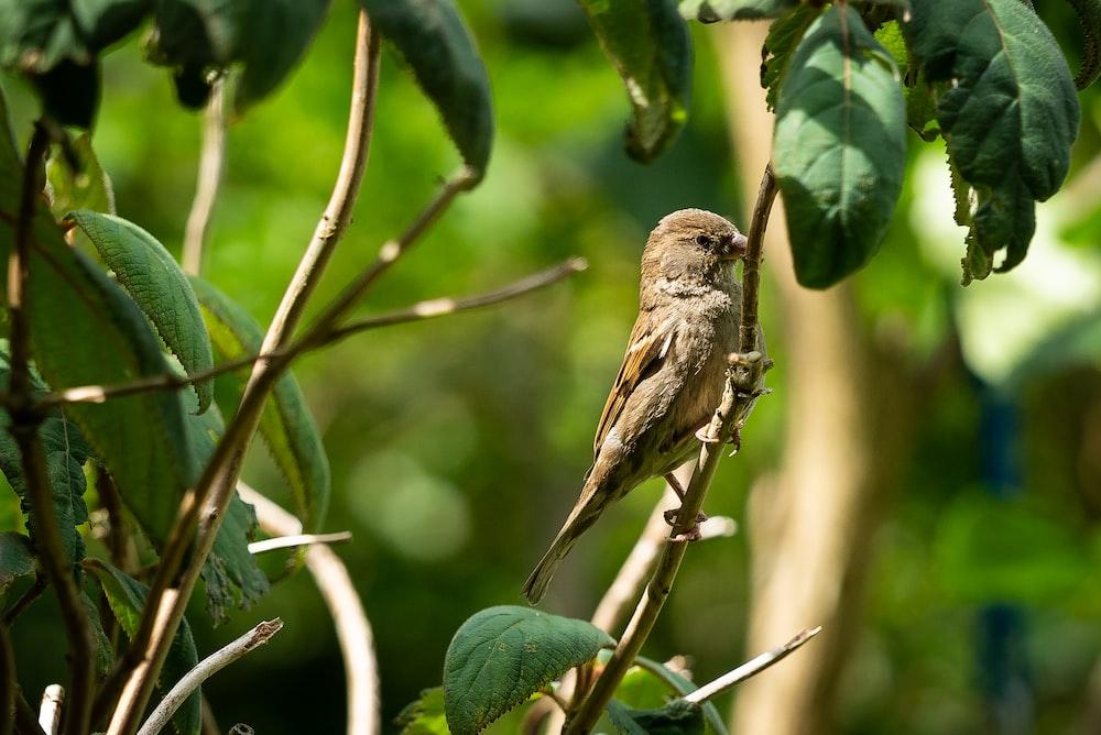 brown bird on green tree branch during daytime