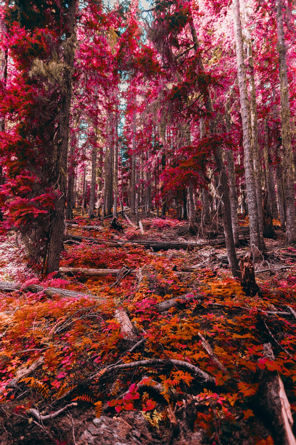 red and brown trees during daytime