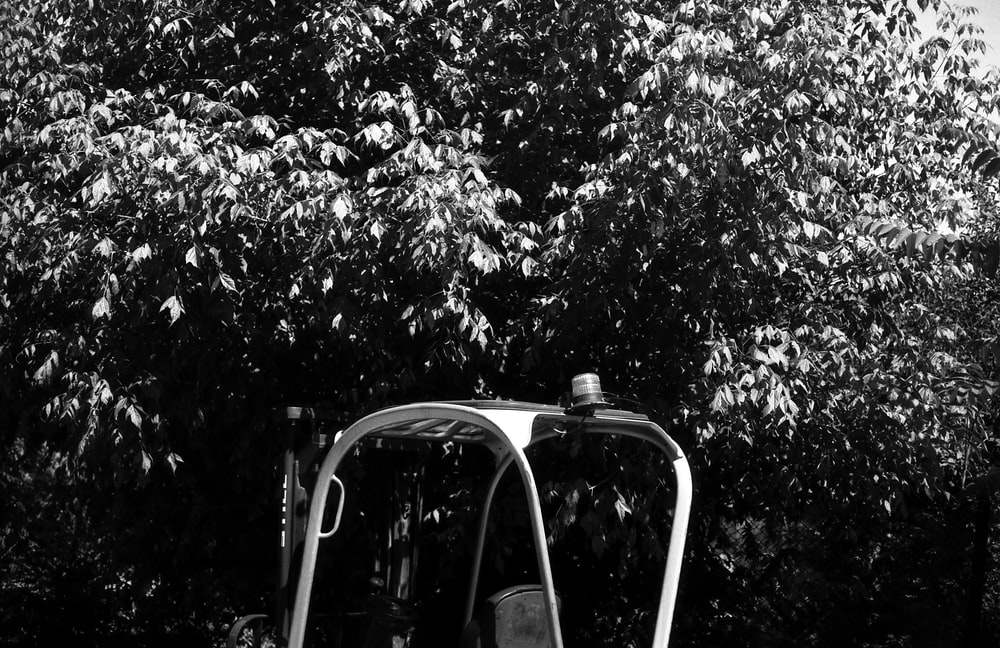 grayscale photo of a car in the middle of a forest