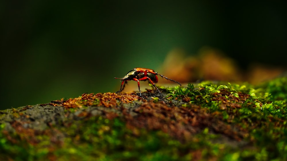 black and orange bug on brown rock
