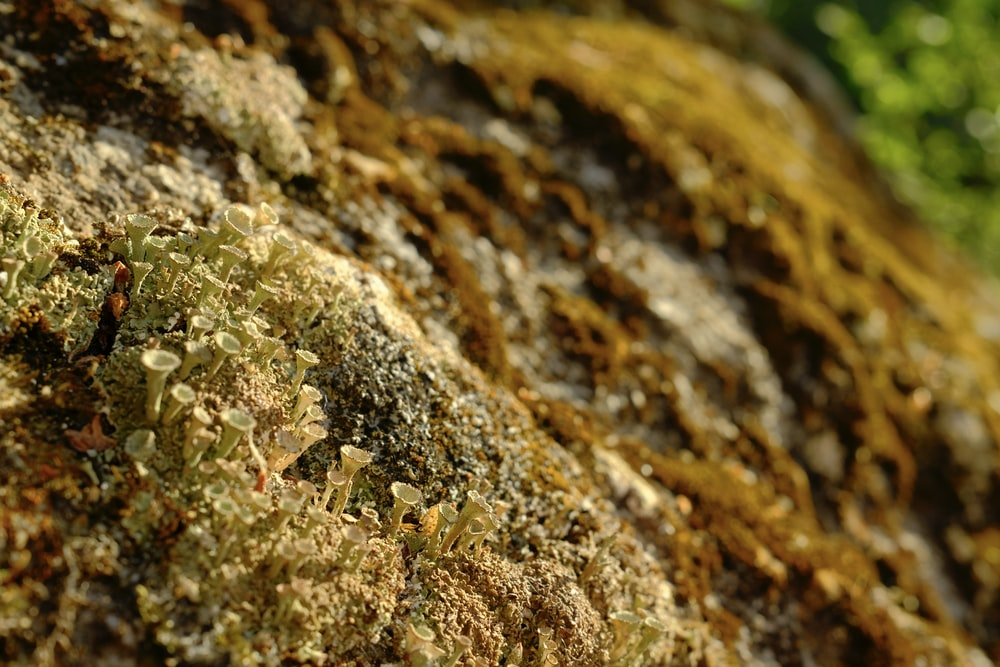 brown and white rock with green moss