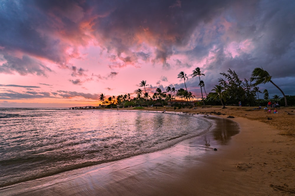 beach shore with palm trees under cloudy sky during sunset