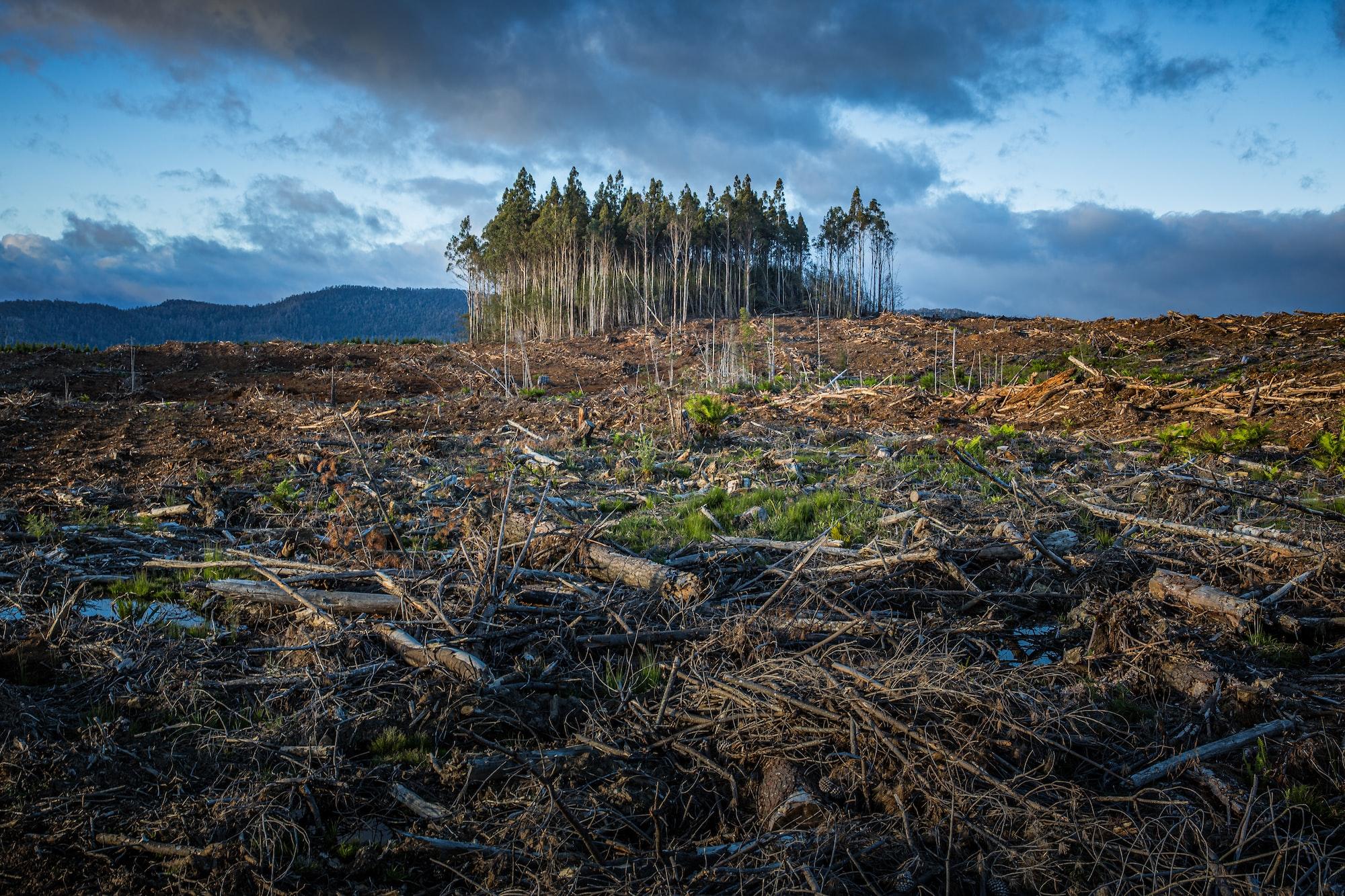 Forestry activities in Tasmania, Australia.