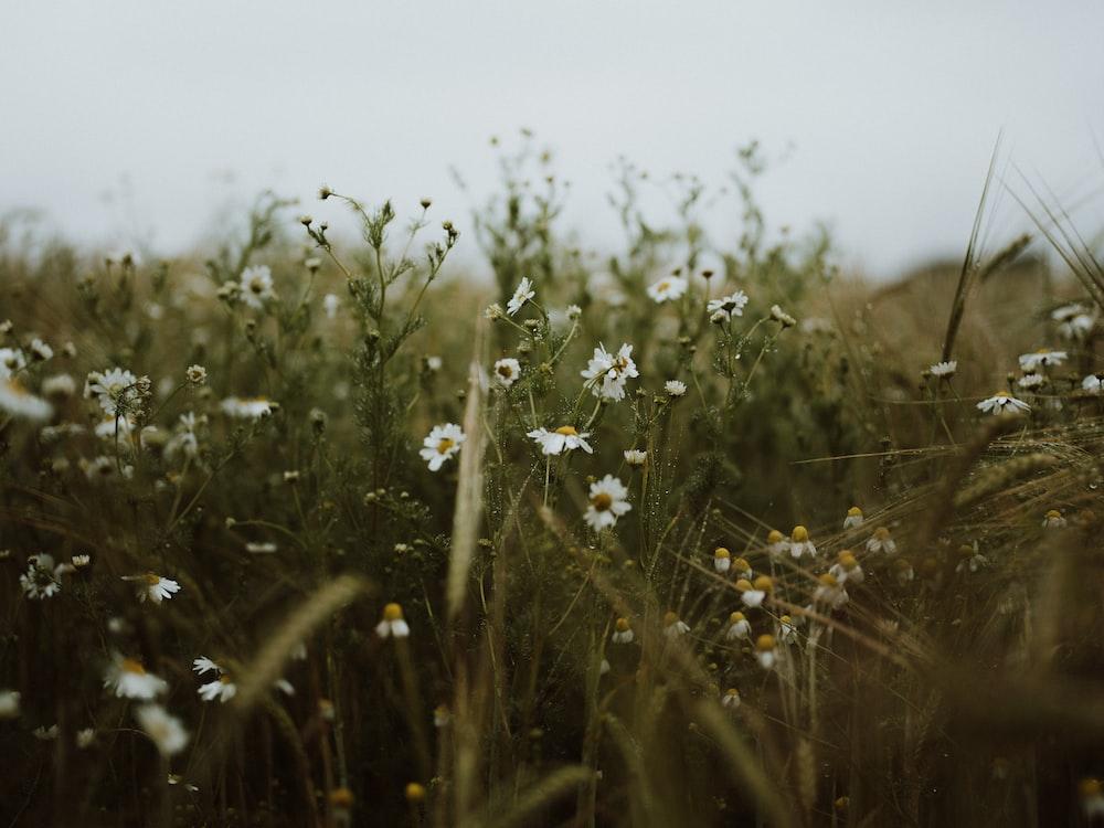 white flower in green grass field during daytime
