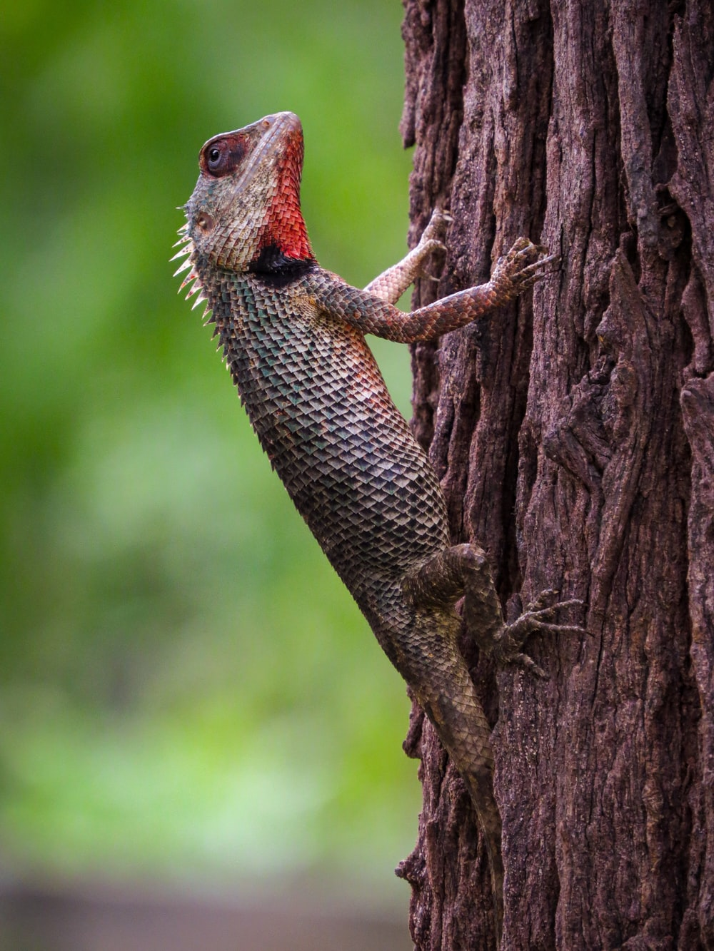 brown and black lizard on brown tree branch during daytime
