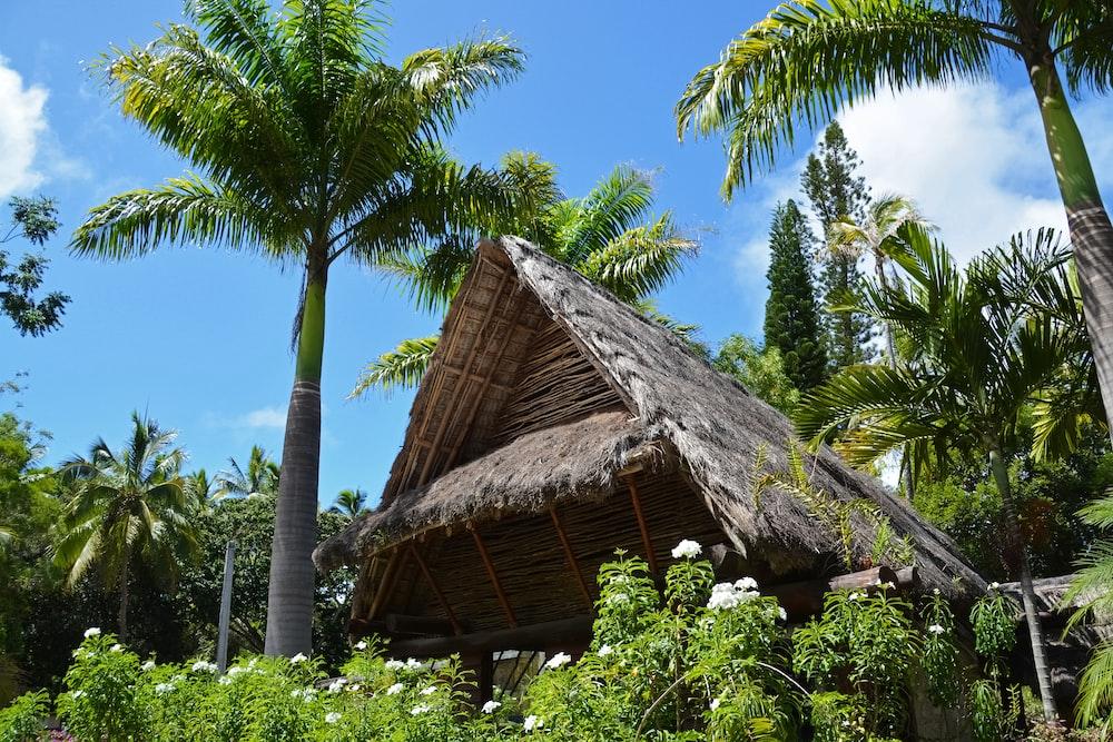 brown nipa hut near palm trees during daytime