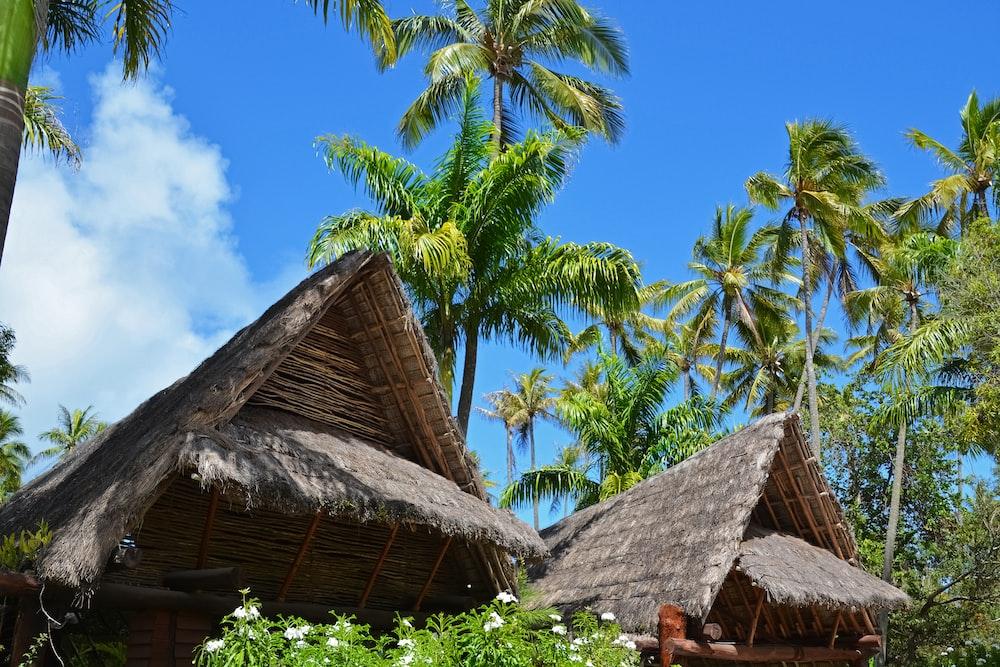 brown nipa hut near palm trees under blue sky during daytime