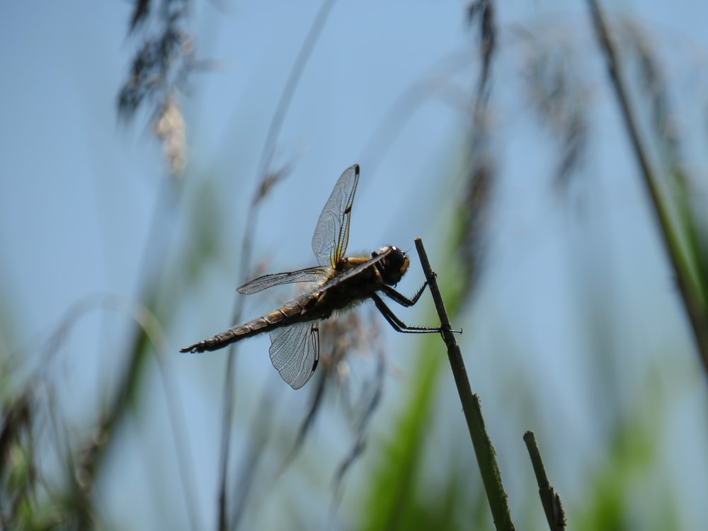black and white dragonfly perched on brown stem in close up photography during daytime
