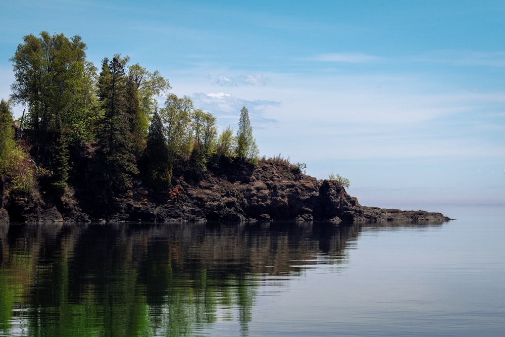 green trees beside body of water during daytime
