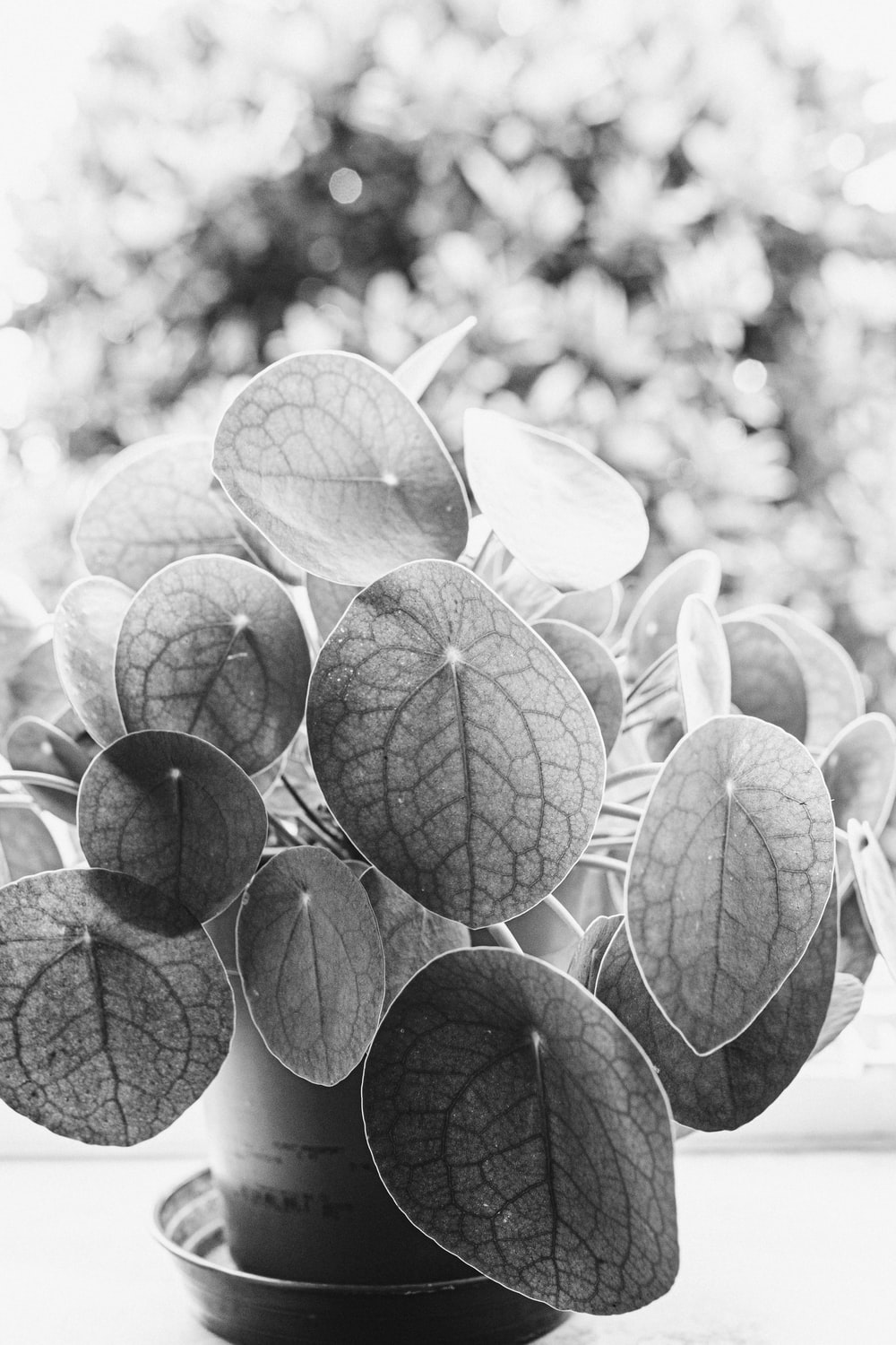 grayscale photo of green leaves