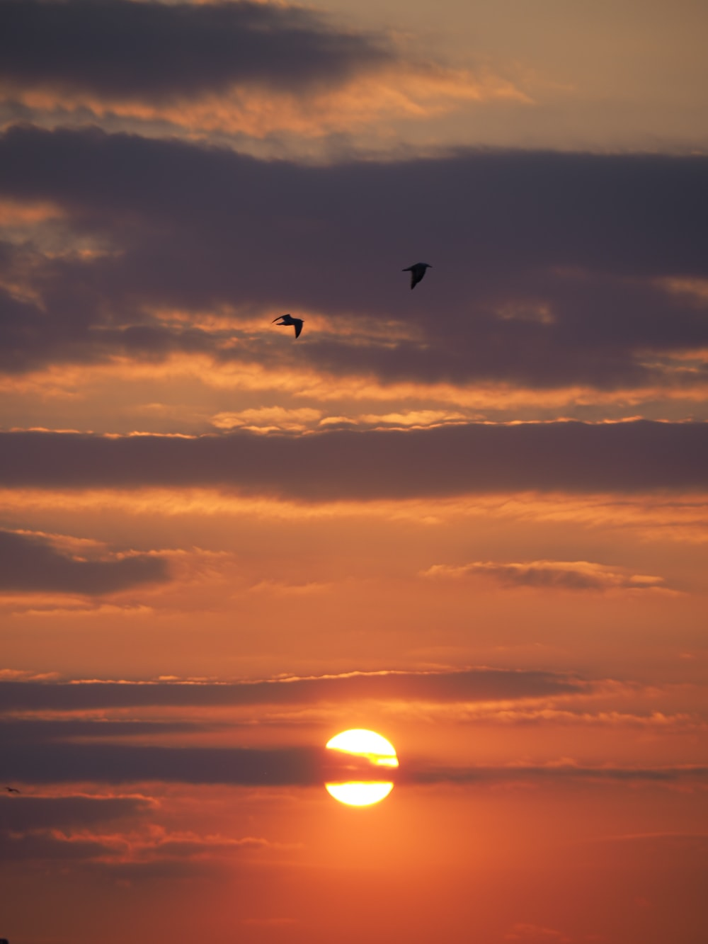 silhouette of bird flying during sunset