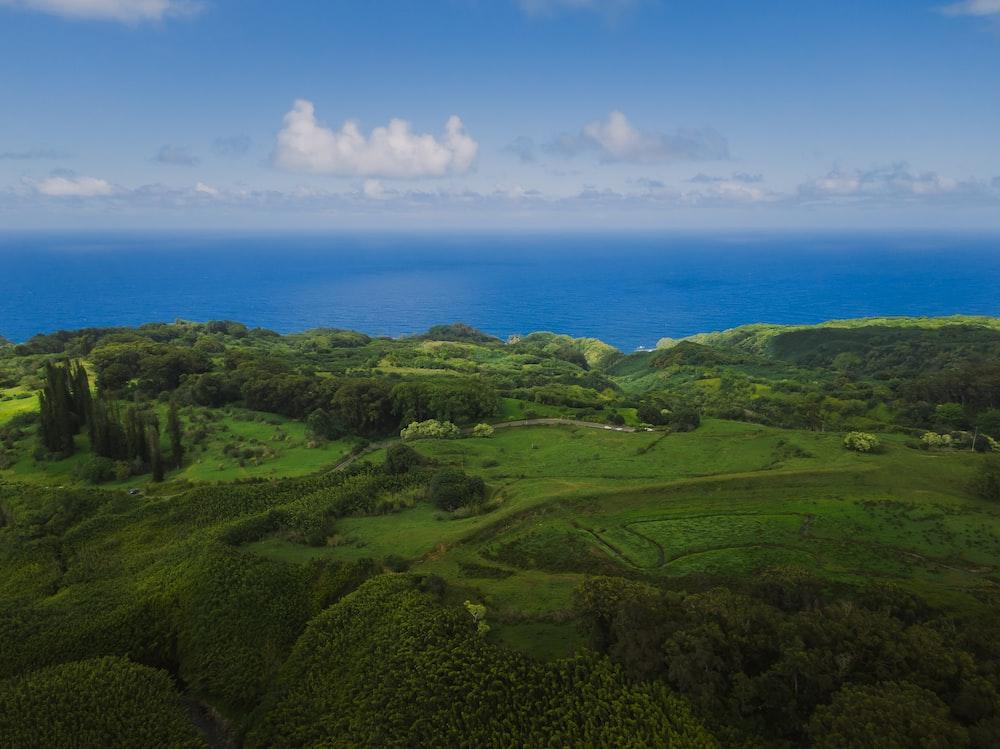 green grass field near blue sea under blue sky during daytime