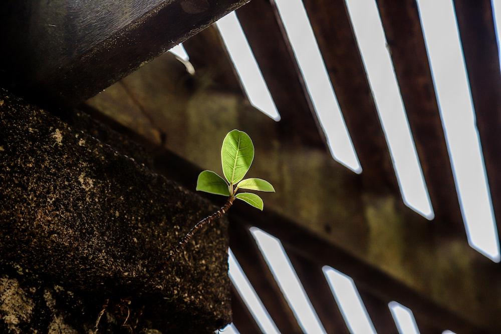 green leaf on brown wooden fence