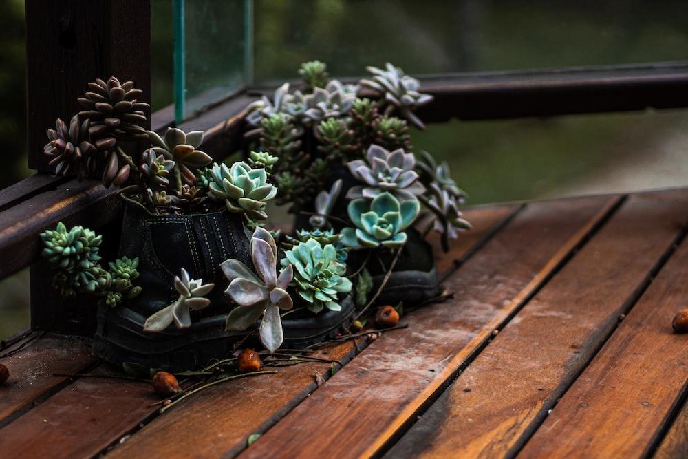 green plants on black plastic pot