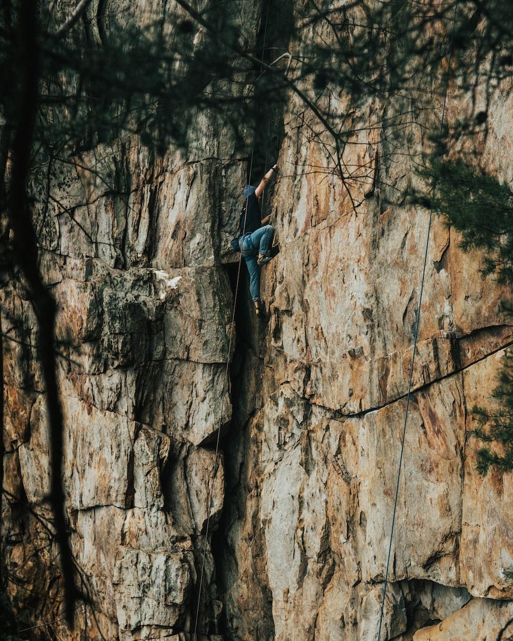 woman in blue long sleeve shirt climbing on brown tree