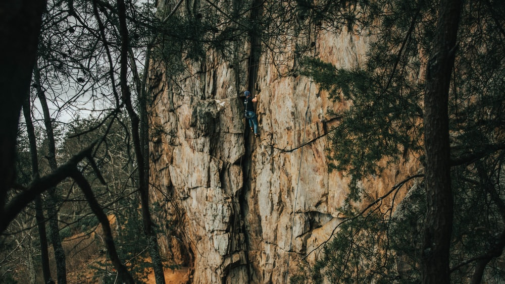 person climbing on brown tree