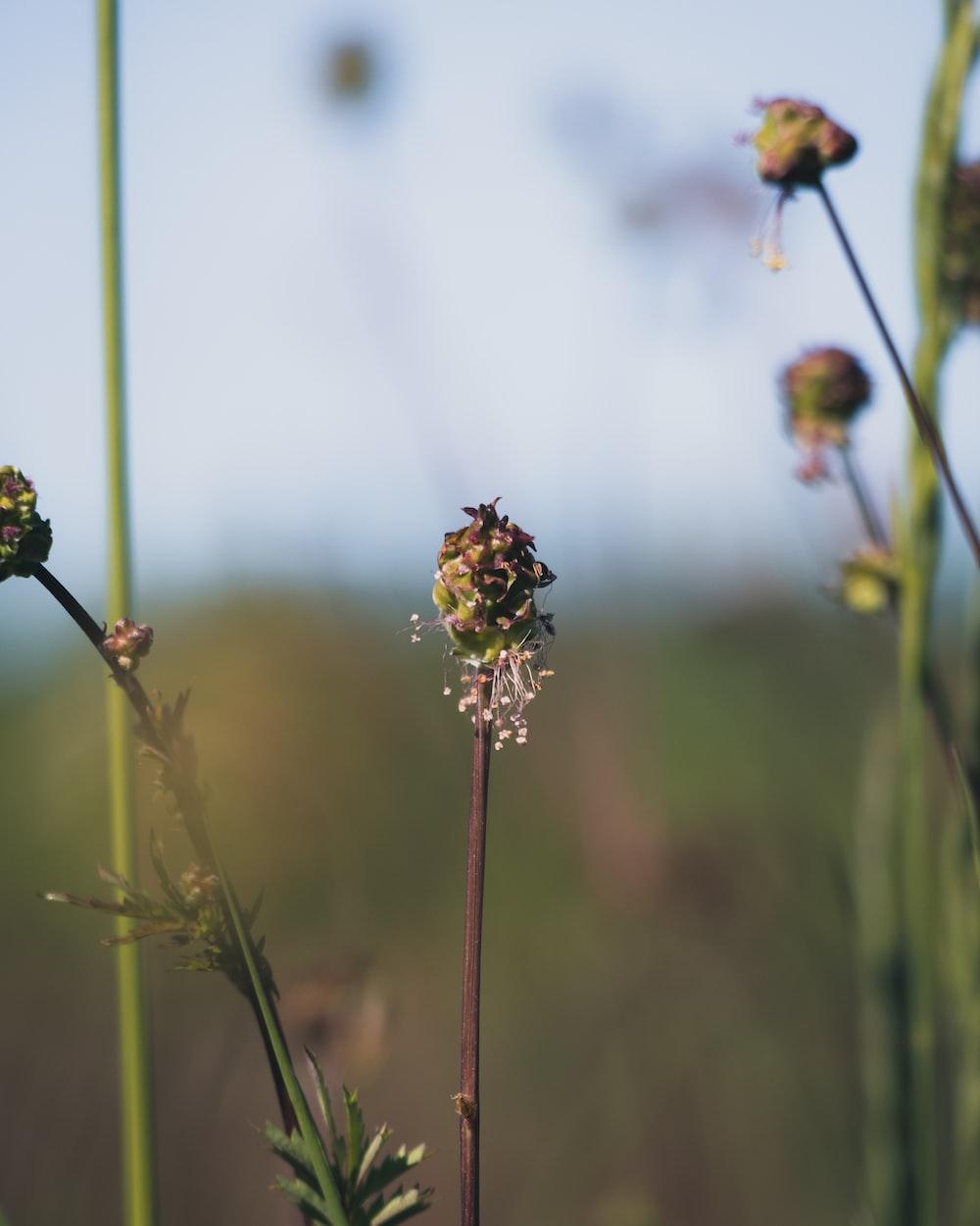 brown and yellow flower in tilt shift lens