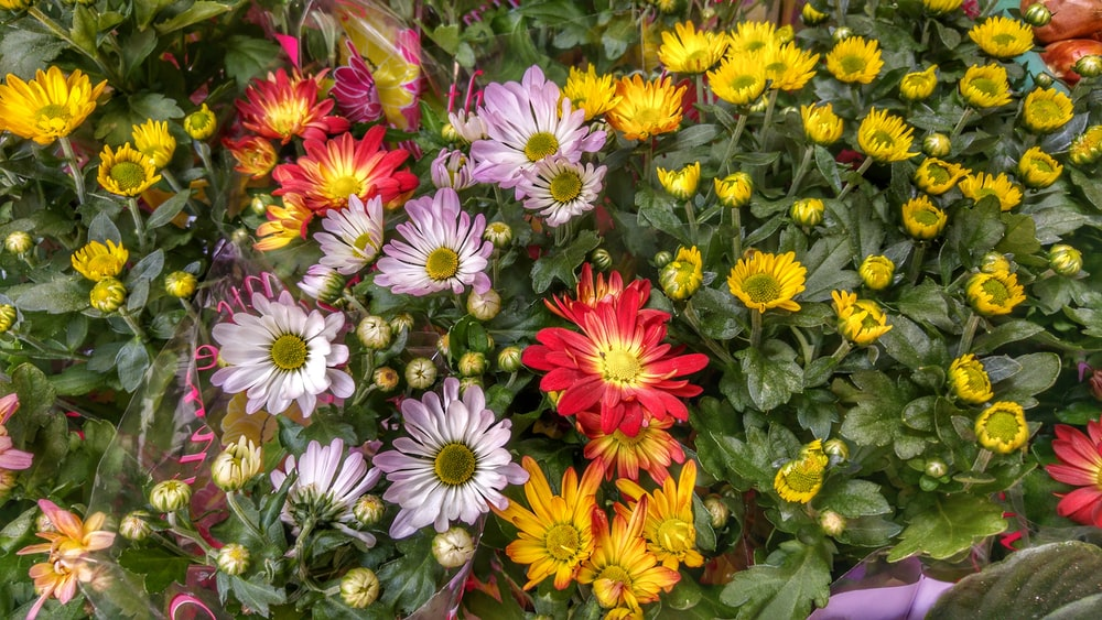 yellow white and red flowers