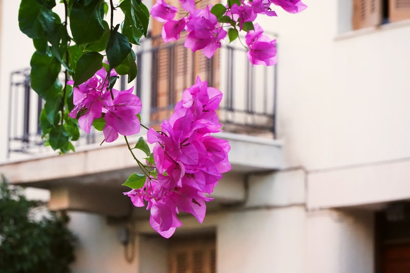 Plaka neighbourhood in Athens, Greece - perfect for Athens digital nomads
