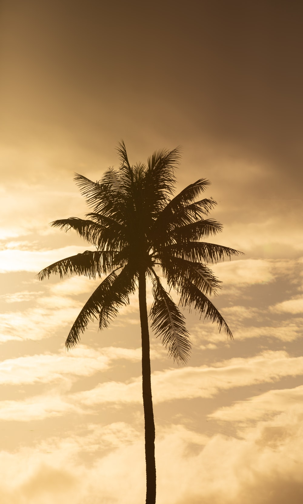 palm tree under cloudy sky during daytime