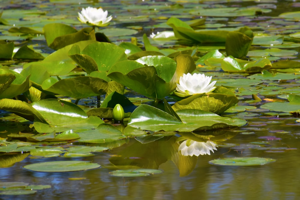 yellow and black bird on green leaf on water lily