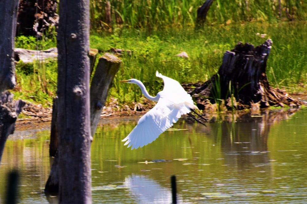 white bird on brown wooden post near body of water during daytime