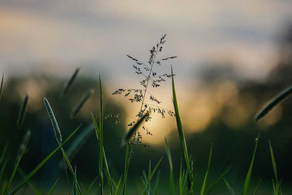 green grass with white flower