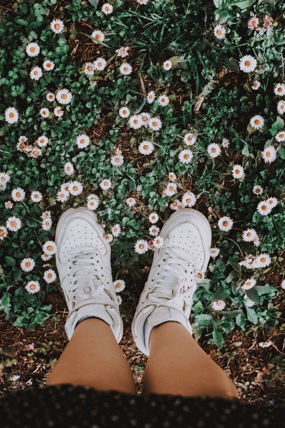 person in white sneakers standing on red and white flowers