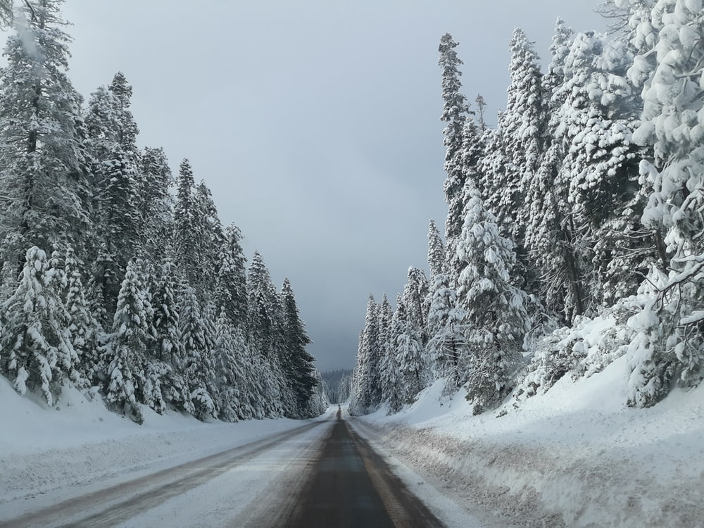 road between snow covered trees
