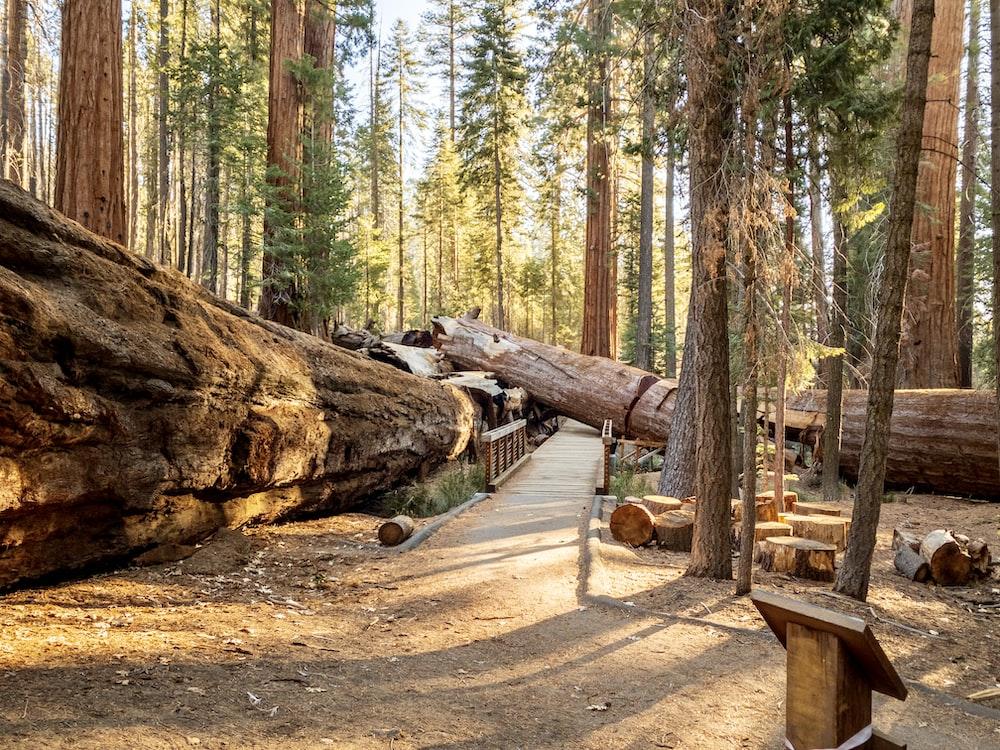 brown wood log on brown dirt road