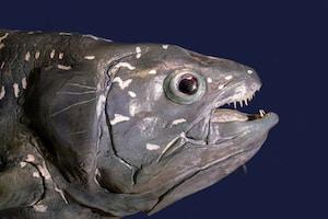grey fish on blue textile