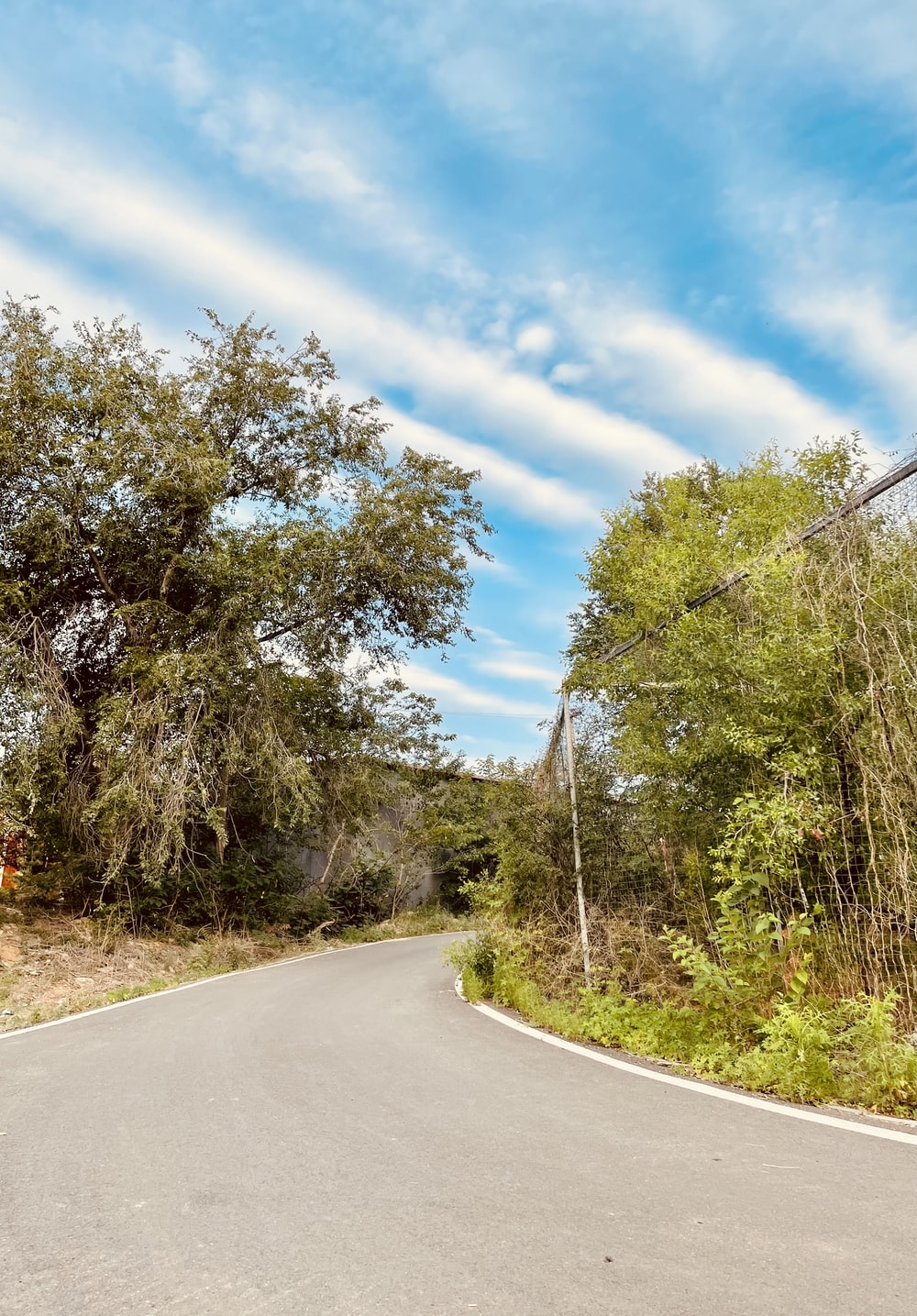 green trees beside gray concrete road under blue sky during daytime
