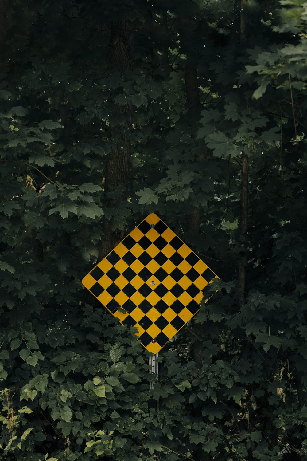 yellow and black checkered flag on green leaves