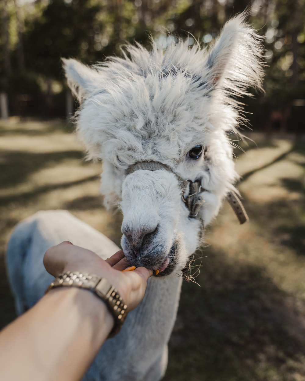 person holding white horse head