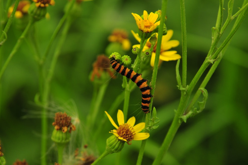 black and yellow caterpillar on yellow flower