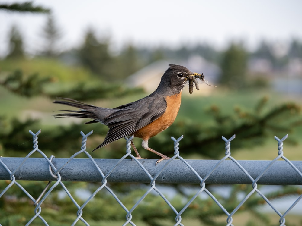 black and brown bird on gray metal fence during daytime