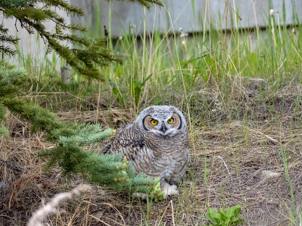 owl on green grass during daytime