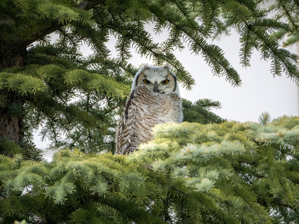 white and gray owl on green tree