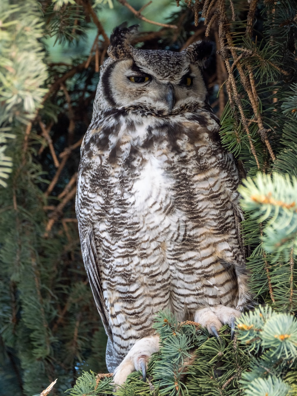 brown and white owl on brown tree branch during daytime
