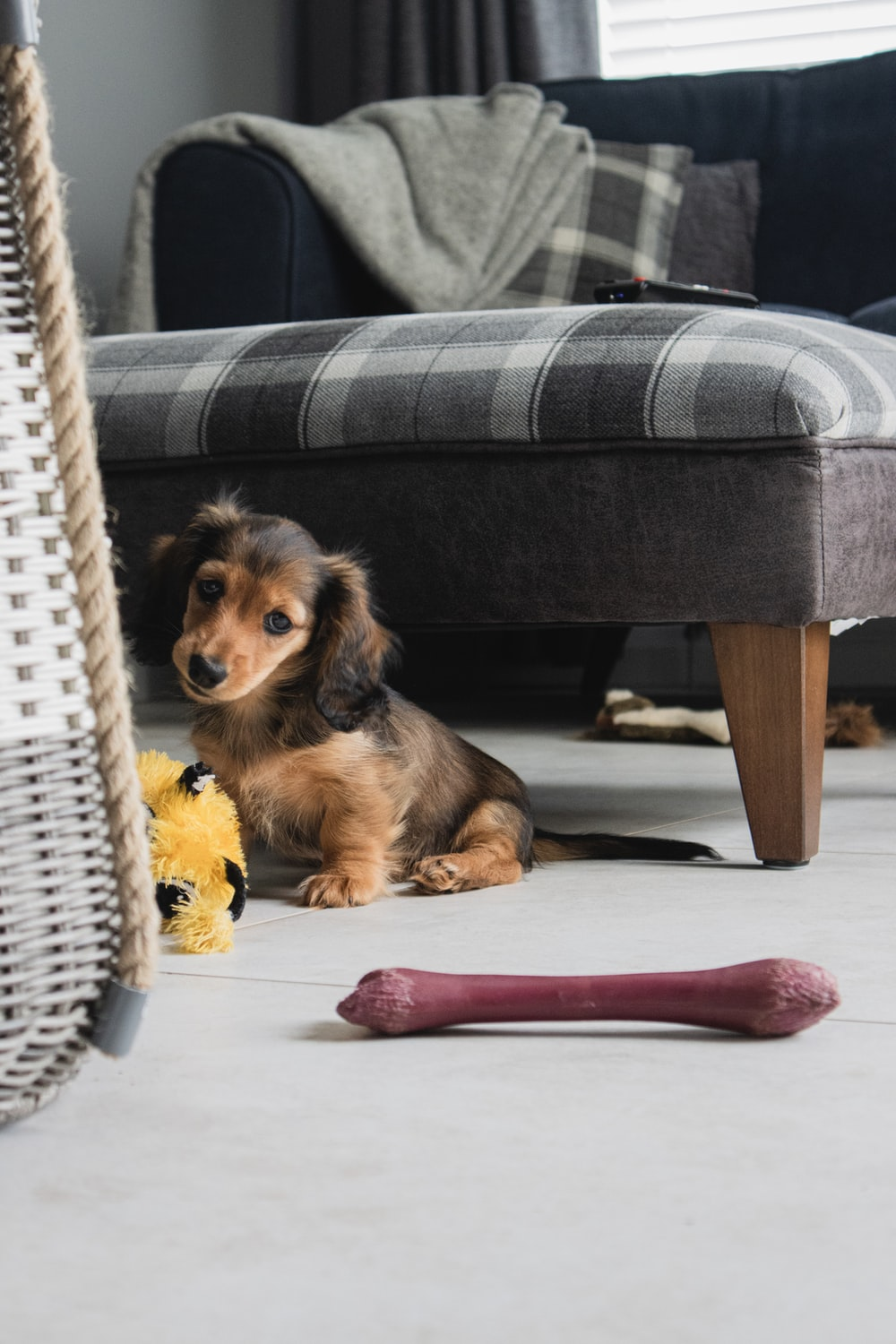 brown and black long coated small dog on white wicker chair