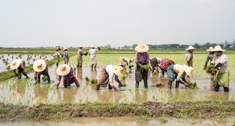 people working on green grass