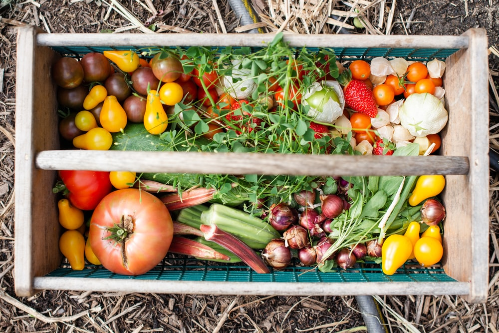 yellow and red tomatoes on green plastic crate