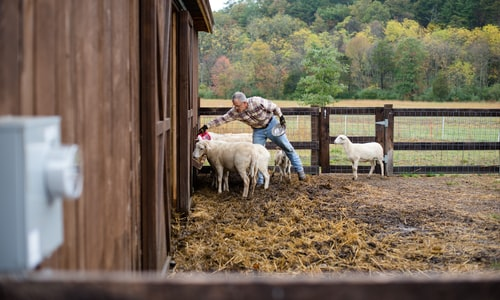 homesteading facts