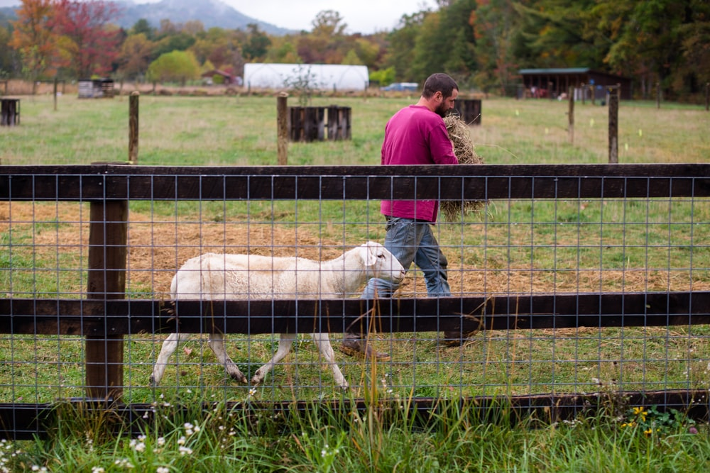 man and woman standing on green grass field with white sheep during daytime